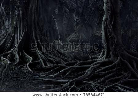 oscuro · forestales · ilustración · naturaleza · diseno · verano - foto stock © bluering