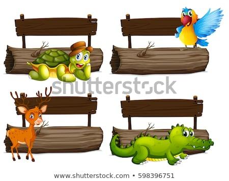 majom · üres · tábla · erdő · levél · eső · felirat - stock fotó © colematt