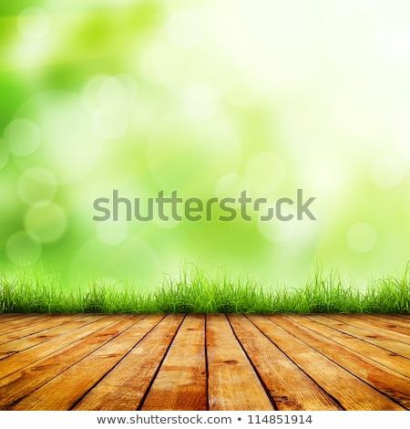 Zöld tavasz buja vidék reggel fény Stock fotó © marylooo