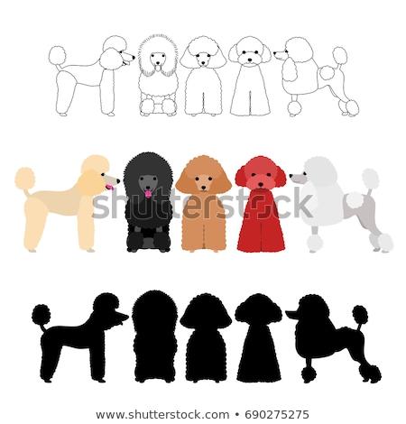 Vetor conjunto poodle mulher arte engraçado Foto stock © olllikeballoon