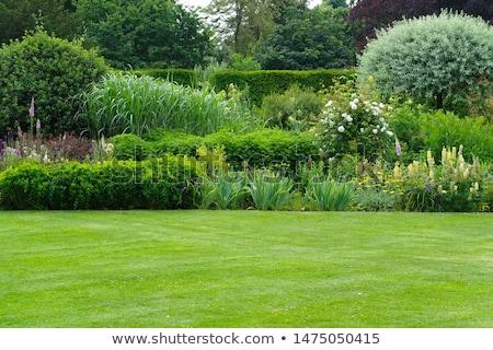 été paysage arbres fleurs plantes Photo stock © robuart