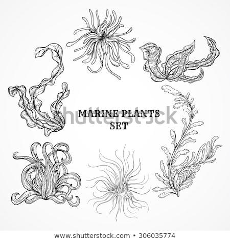decorative sea algae seaweed hand drawn vector stock photo © pikepicture