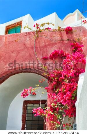 Belle rose patio santorin Grèce maison Photo stock © feverpitch