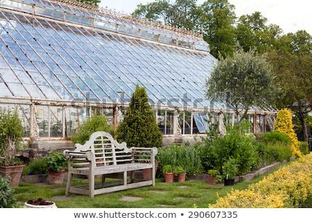 Ház Dublin Írország egy fa természet Stock fotó © borisb17
