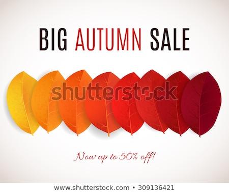 Ingesteld vector najaar verkoop kleurrijk Stockfoto © orson
