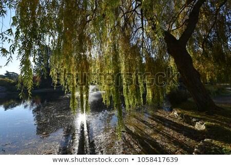 soleil · lac · ciel · eau · lumière - photo stock © mybaitshop