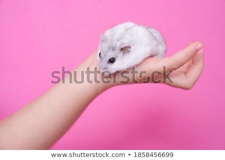 хомяк Palm стороны глазах молодые пальца Сток-фото © RuslanOmega