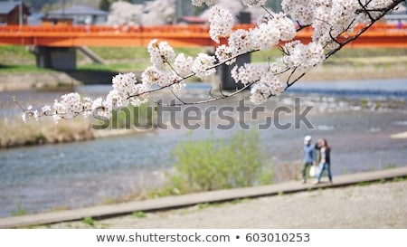japanese cherry blossom in kakunodate stock photo © yoshiyayo