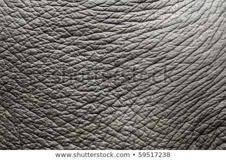 Olifant huid detail abstract Stockfoto © timwege