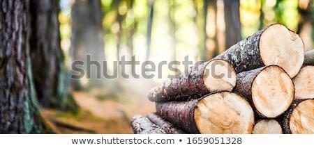 yakacak · odun · dışında · ev · orman · duvar - stok fotoğraf © pedrosala