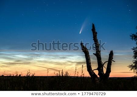 Stock fotó: Sodálatos · természetes · napkelte · táj · fa · sziluettje · és · a · városok