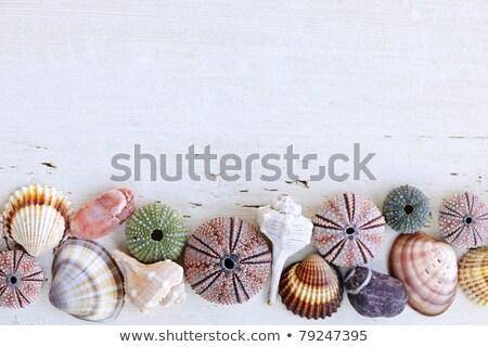 Mediterranean seashells  Stock photo © vaeenma