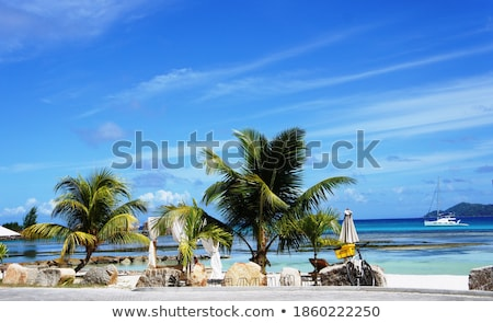 壮大な 熱帯ビーチ 風景 海 夏 ストックフォト © moses