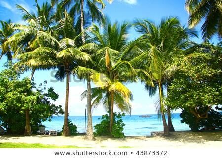 Folha de palmeira ocultação sol folha Foto stock © eldadcarin