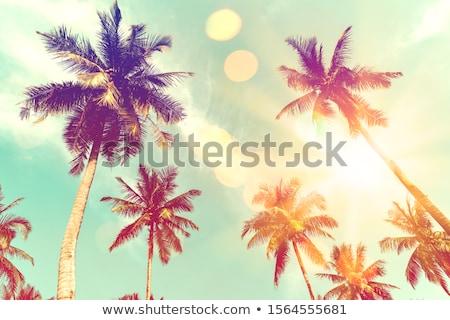 солнце ладонями ретро иллюстрация Palm морем Сток-фото © marinini