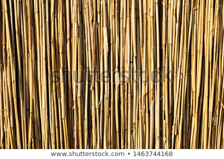 Stacked sheaves of reeds on the field Stock photo © Discovod