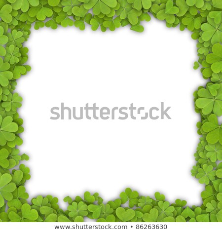 border made of four leaf clovers on a white background stock photo © impresja26