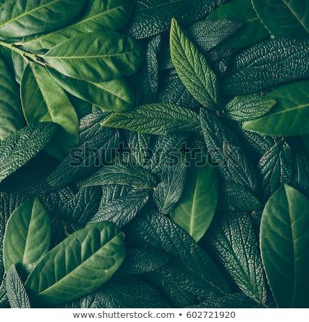katicabogár · friss · zöld · levelek · víz · absztrakt · természet - stock fotó © nejron