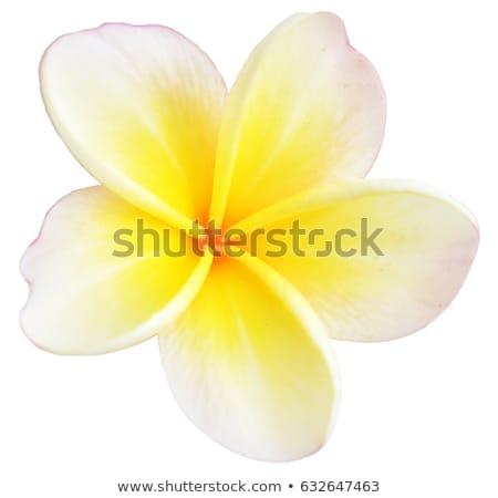 Stock photo: wet yellow white Flower