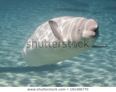 Wal Aquarium Tier Fotografie touristischen Tourismus Stock foto © bmonteny
