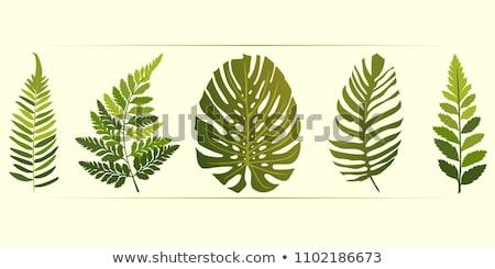 Yeşil eğreltiotu soyut üç yaprakları form Stok fotoğraf © silkenphotography