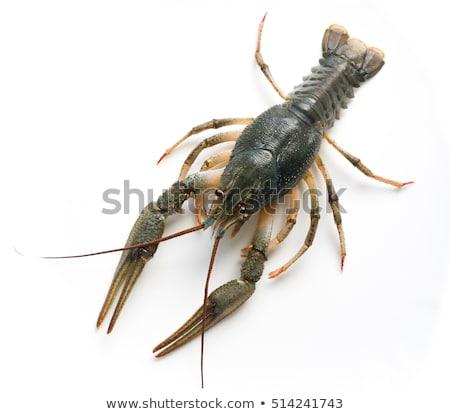 Crayfish isolated on white background Stock photo © ozaiachin