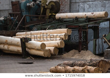sawn logs and sawdust stock photo © smartin69