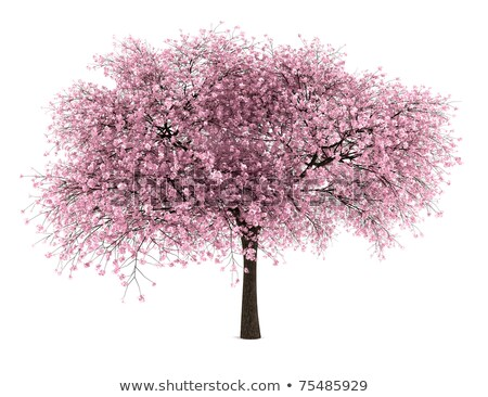 Bright cherry tree stock photo © olandsfokus