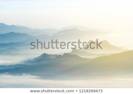 tűlevelű · erdő · ködös · reggel · emelkedő · nap - stock fotó © kotenko