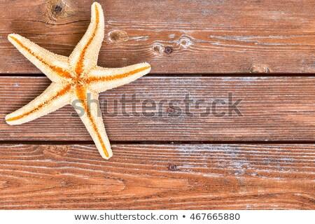 Denizyıldızı iskelet ahşap üst köşe Stok fotoğraf © ozgur