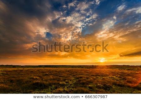 Landscape, sunny dawn in a field Stock photo © razvanphotos