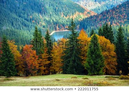 Autunno panorama decidue foresta montagna betulla Foto d'archivio © Kotenko
