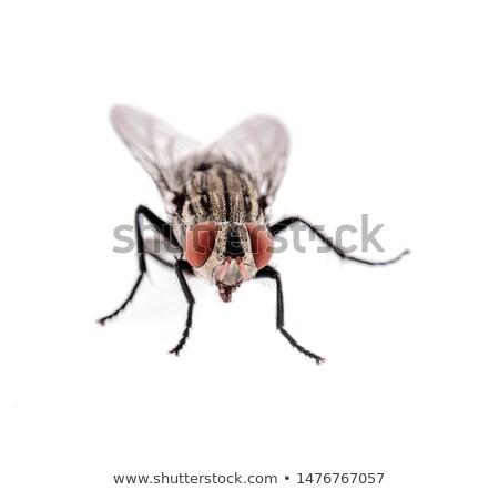 Macro shot of gadfly Stock photo © digitalr