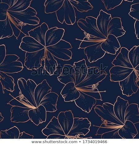 красивой цветок Лилия окрашенный графических стиль Сток-фото © frescomovie