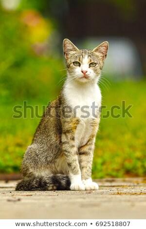 бездомным · кошки · пить · воды · животные · серый - Сток-фото © taviphoto