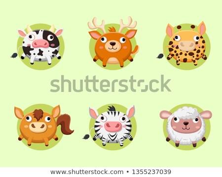 Tábla sablon aranyos állatok állatkert illusztráció háttér Stock fotó © colematt