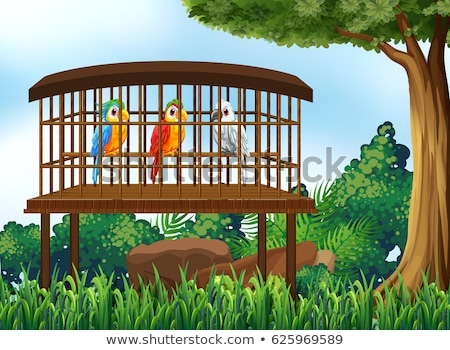 Three macaw parrot birds in wooden cage Stock photo © colematt