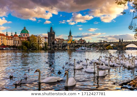 Stock photo: Birds on riverbank in Prague