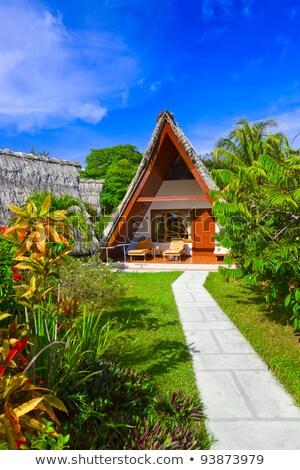 tropical · island · görüntü · su · doğa · sanat · palmiye - stok fotoğraf © colematt