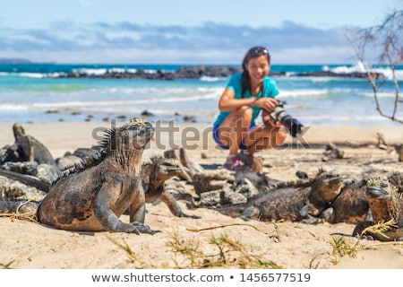 Galapagos Islands wildlife and ecotourism adventure tourist and marine iguana Stock photo © Maridav