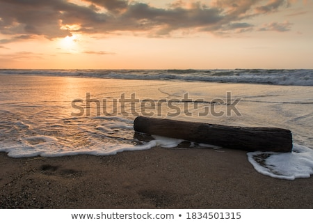 old stump on the seashore stock photo © alex9500