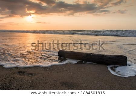 Old stump on the seashore Stock photo © Alex9500