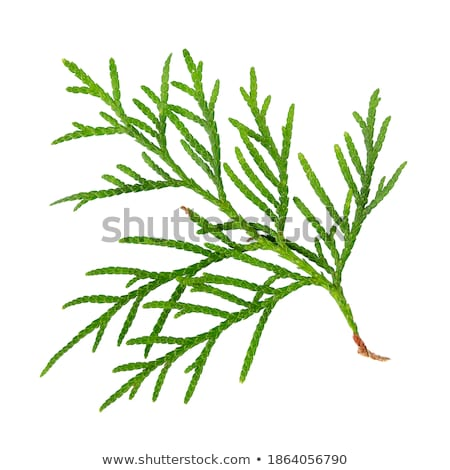 verde · abstrato · fresco · árvore · natureza · mundo - foto stock © agfoto