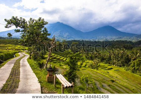 country road at rice fields of jatiluwih in southeast bali stock photo © boggy