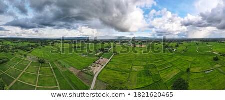 Foto stock: Arrozal · grama · verde · blue · sky · nuvem · nublado · paisagem