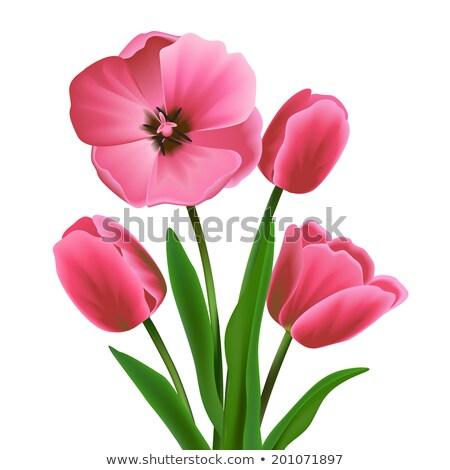 Belo florescimento tulipa primavera parque buquê Foto stock © yoshiyayo