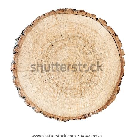 slice of wood timber Stock photo © artush