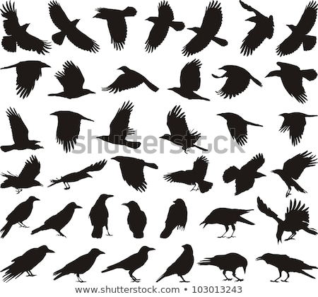 silhouet · kraai · achtergrond · zwarte · vrijheid · witte - stockfoto © perysty