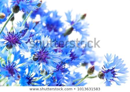 bouquet cornflowers stock photo © ivonnewierink