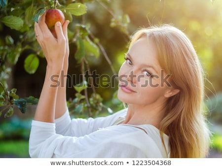 Gyönyörű nő alma étel gyümölcs egészség háttér Stock fotó © wavebreak_media